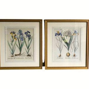 Framed Botanicals, Set of 2
