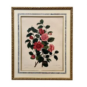 Botanical Print Anemone